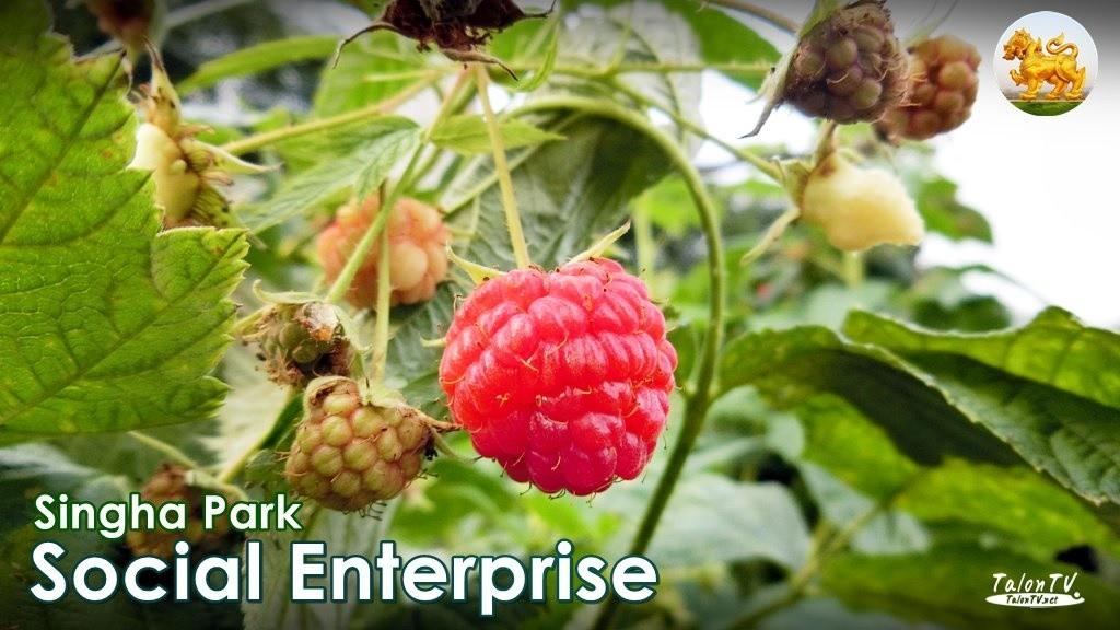Social Enterprise Thailand